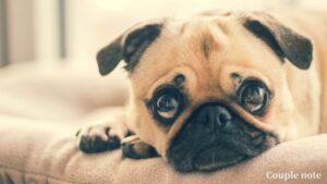 犬用早食い防止食器の選び方