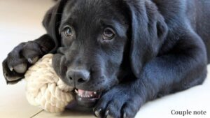 犬の早食いをより防止する方法